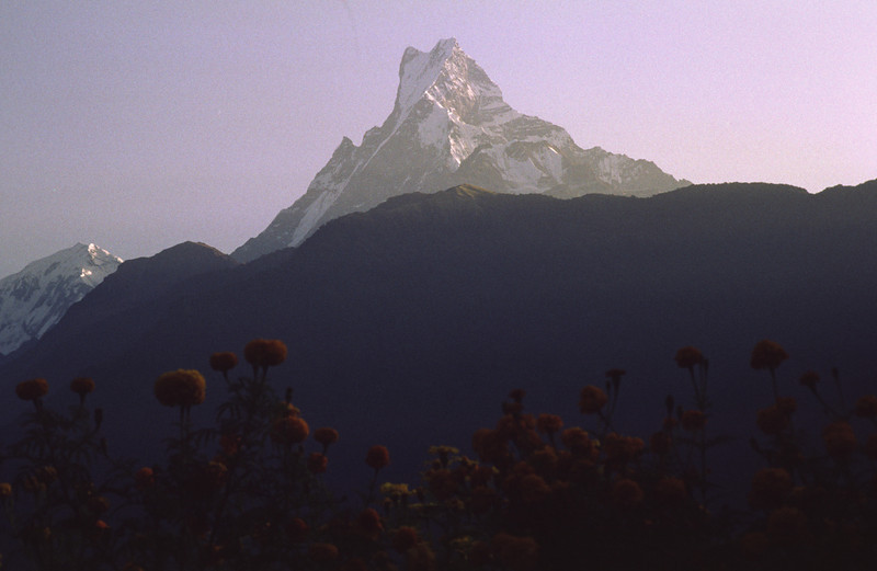 911018, day 17. Ghandrung-Dhampus.<br /> Sunrise over Machapuchhare as seen from Ghandrung.