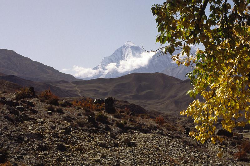911012, day 11. Muktinath-Marpha<br /> Dhaulagiri I