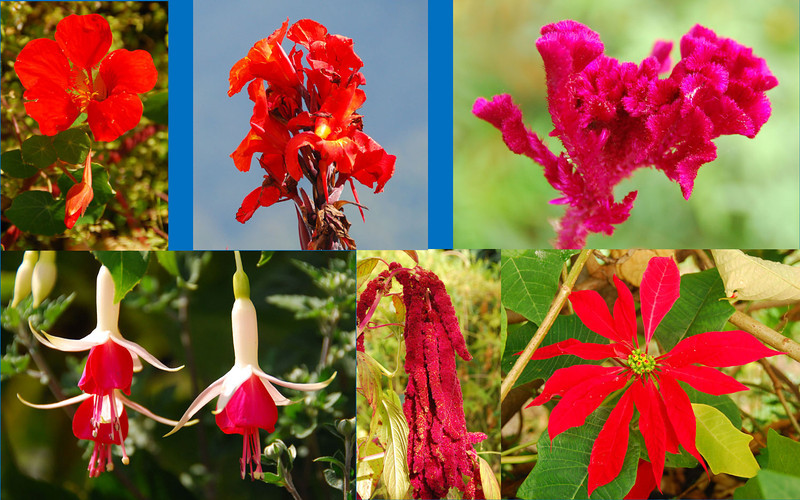 ...and here are some red flowers...