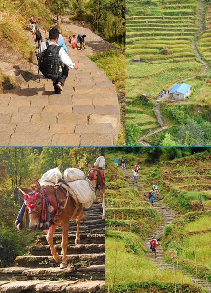 Gurung staircases often climb a thousand feet up 30 to 45 degree hillsides.  Hard lives of humping 100 pound loads up these trails make the Gurungs exceedingly tough; they are one of the four ethnic groups that can become Gurkha soldiers.