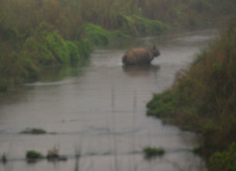 On morning we spotted this rhino crossing a small river and tracked it into the grasslands.  (Sorry for the blurred photo, but it wasn't even sunrise yet and elephants are not a smooth ride.  The camera was at ISO 1600.)