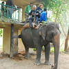 The main attraction in Chitwan is riding elephants to look for tigers and rhinos.  To get on an elephant, the driver just backs it up the loading dock...