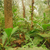 This is what a healthy jungle looks like:  diverse plant species and somewhat open.