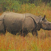 Here he is in the open.  There are about 450 rhinos in Chitwan National Park, so seeing them is almost guaranteed.