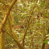 In the jungle areas you tend to see prey animals like deer, which are hiding in the dense foliage.