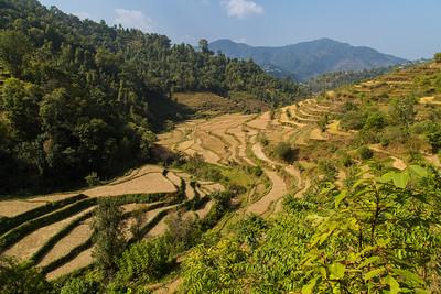 Rice paddie in Tansen