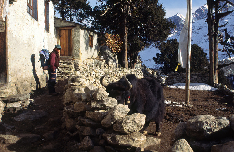 960303, day 10. Pangboche-Dole<br /> Due to too much snow further north we have to go back and will try to walk north in the Gokyo valley.