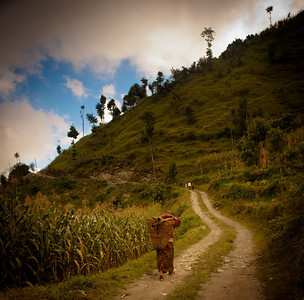A common occurrence along the Indigenous peoples trail, Nepal. I rarely saw a truck along my eight day hike.