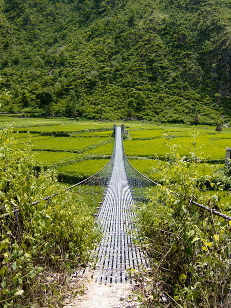 bridge over the rice field to Lubughat