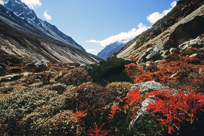 Ghunsa Khola valley with autumn color, between Lhonak and Kambachen
