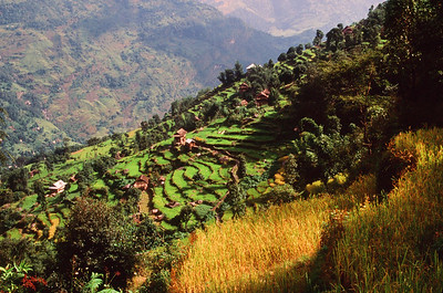 Farming terraces