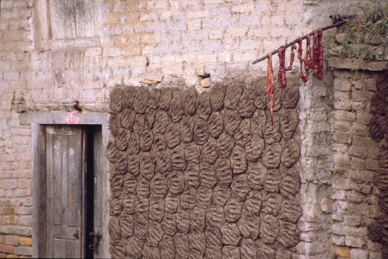Cow dung left to dry on the wall. Used as fuel.