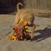 Dog festival