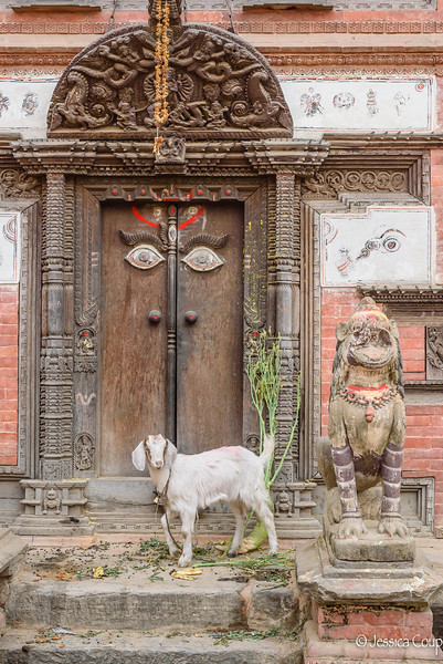 Sacred Goat