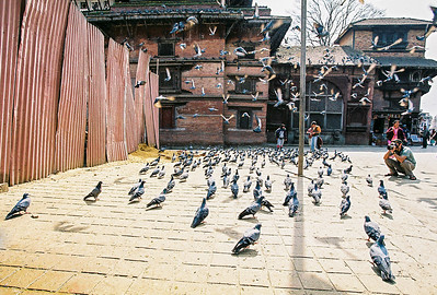 Pigeons take flight in Durbar Square, Kathmandu