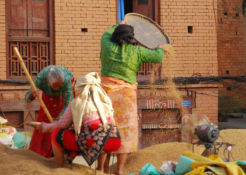 These women in Bhaktapur are drying rice on the street, but with the help of an electric fan to separate the chaff when they toss the rice into the air.
