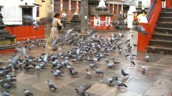 Early morning pigeon feeding, Kathamandu, Nepal