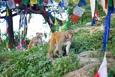 """Monkeys! — Swayambhunath Stupa. (aka, """"Monkey Temple""""), Kathmandu, Nepal"""