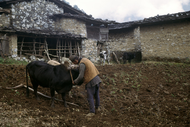 Farmer in Malemchigaon with a wooden plow.
