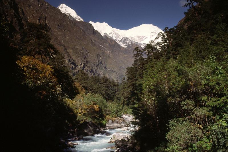 View towards LAngtang Lirung from Gumnachok, 2800 m. Langtang river.