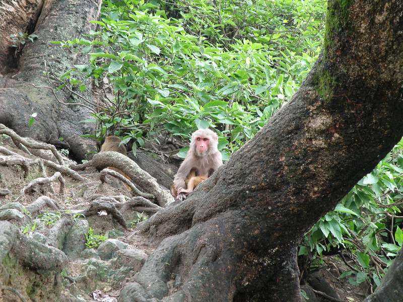 One of many monkeys at the site