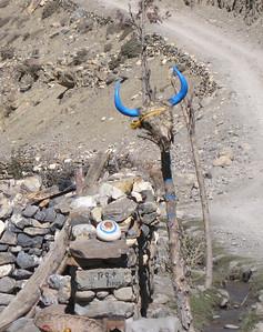Yak head—Mustang Valley, Nepal