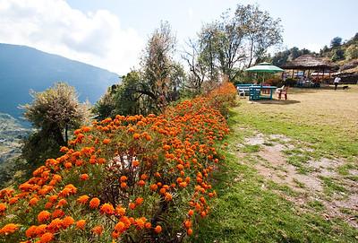 Flowers at Ulleri, Nepal