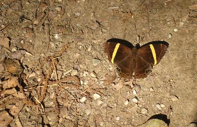Moth—Ghorepani, Nepal