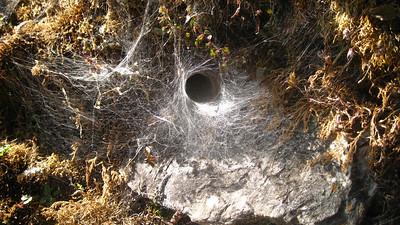 Spider Cave—Ghorepani, Nepal