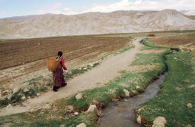 Woman farmer near Lo Manthang