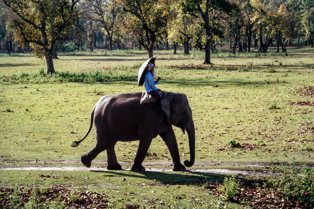 Elephant Sanctuary, Royal Chitwan National Park
