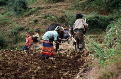 Bhandar (7,218 ft).  Farmer and family with water buffalo and wooden plow.