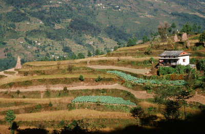 Farming terraces in Jiri (6,248 ft)