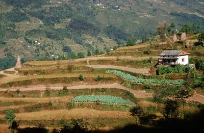 Farming terraces in Jiri (6,248 ft)