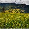 Tolka, Annapurna Sanctuary Trail