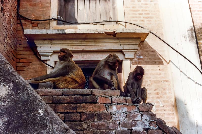 Monkeys on Swayambhunath Steps, Kathmandu