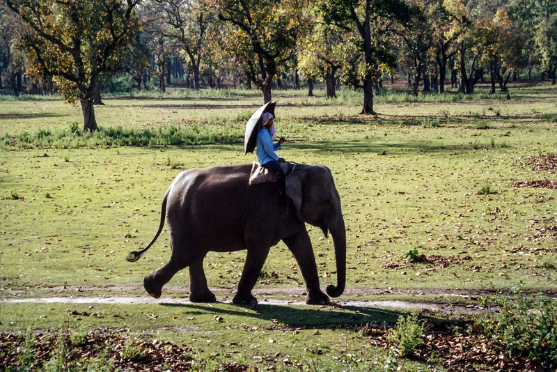 Elephant Sanctuary, Royal Chitwan National Park