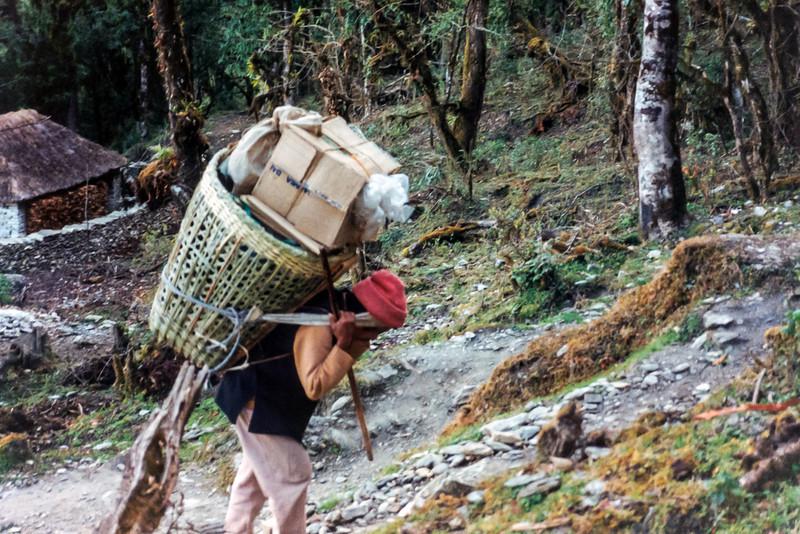 Sherpa at Bichok, Annapurna Sanctuary Trek