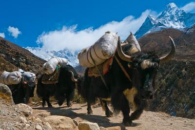 Everest-Base-Camp-Trek-Nepal-6