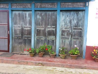 Geraniums in Nepal