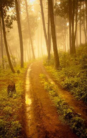 Trail on Shreenagar Hill Tansen Palpa