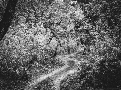 The Road through the Woods