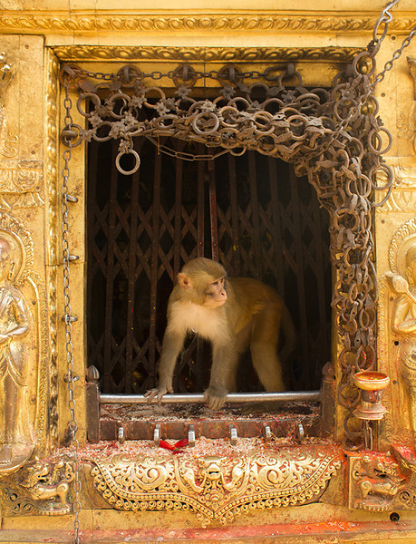 Swayambhunath - Monkey Temple, Kathmandu