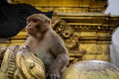 CB_Nepal_14-106