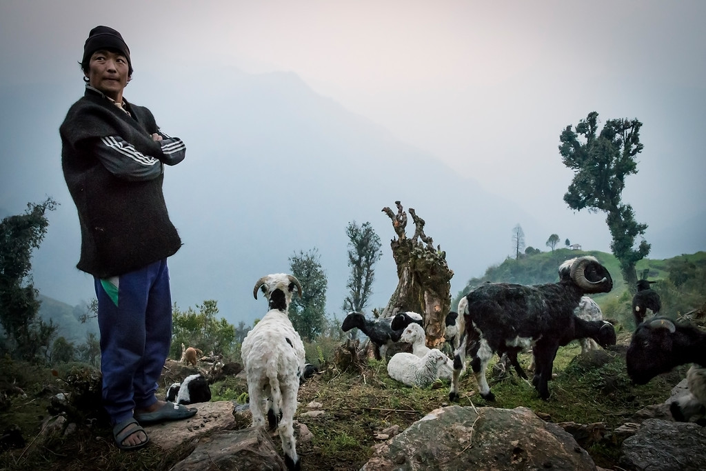 Sherpa shepards in the early morning