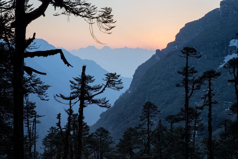 Himalayan forest at Mumbuk