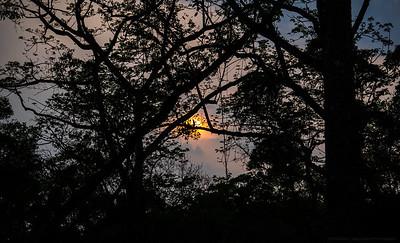 Sun throught the Trees