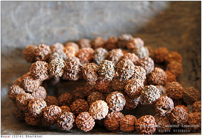 Rudraksha - a seed from the fruit of the Elaeocarpus Ganitrus Roxb tree. Representing thr tear of fulfillment shed by Shiva once he emerged from a long period of yogic meditation, the scared seeds are used for prayer beads.
