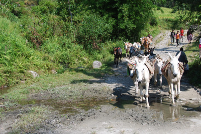 064 - Donkeys carry supplies