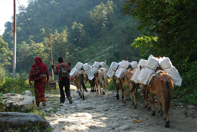 062 - Donkeys carry supplies
